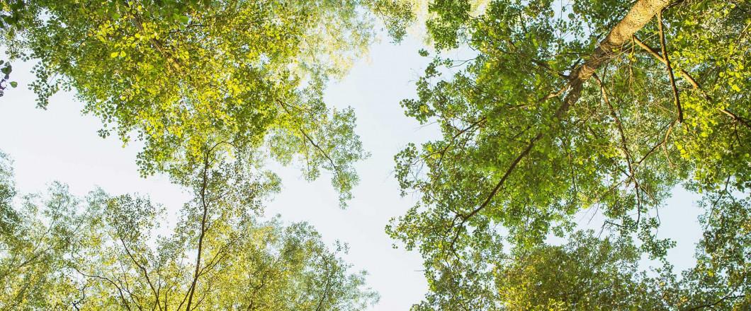 Don't Let Hazardous Trees Pose a Threat to Your Property